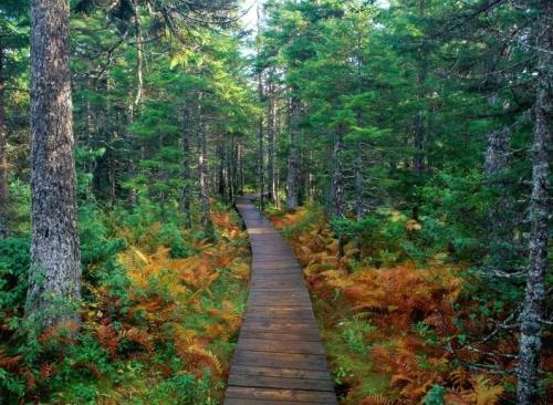 Fundy National Park, New Brunswick, Canada.