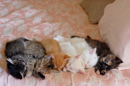 yellowblog:  In one stroke, I will pet them all! — Cute Overload