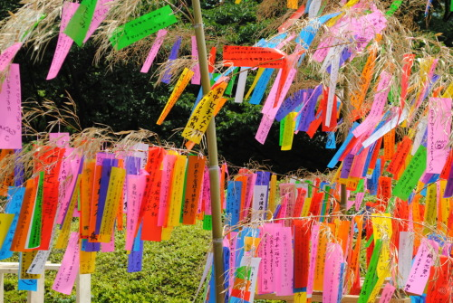 "somewhereintheworldtoday:  Tanabata (meaning ""Evening of the seventh"") is a Japanese star festival on the 7th July,  derived from a beautiful Chinese legend. People generally celebrate this day by  writing wishes on small pieces of paper, and hanging them on bamboo  trees. Read more about Tanbata and its starry love story."