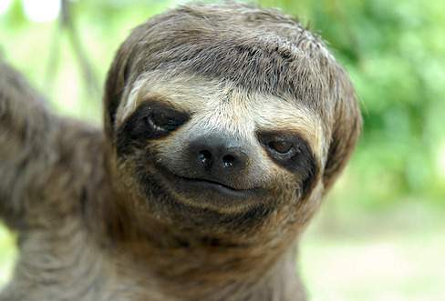 Sloths That Look Like Justin Bieber | Buzzfeed ..that look like lesbians that look like Conan O'Brien?