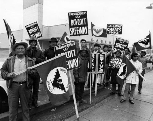 "Filipino United Farm Workers Union (UFW) supporters picket outside of a California Safeway store, February 1973. The UFW union reached a three-year contract with major grape growers in 1970 after years of struggle and a nationwide grape boycott. However, in 1973 when the contracts expired, major grape growers signed ""sweetheart"" contracts which the UFW responded with strikes and a nationwide boycott of lettuce and grapes. The whole movement began in Coachella in the summer of 1965 when a group of Filipino workers went on strike demanding that their wages be increased from $1.10 an hour as well as better living conditions. After a succesful first strike they did it again, but this time in Delano where wages were also starting at $1.10 an hour. However, the struggle became a lot harder when the growers were very successful in dividing and creating conflict between Mexican and the Filipino workers. Larry Itliong and Andy Imutan, leaders of the largely Filipino Agricultural Workers Organizing Committee (AWOC), decided to take action by seeing Cesar Chavez, the leader of the National Farm Workers Association (NFWA). It took several discussions and a lot of faith, but finally the Filipinos and Mexicans joined as one on September 16, to picket the Delano growers. A few months later AWOC and NFWA joined together as the United Farm Workers."