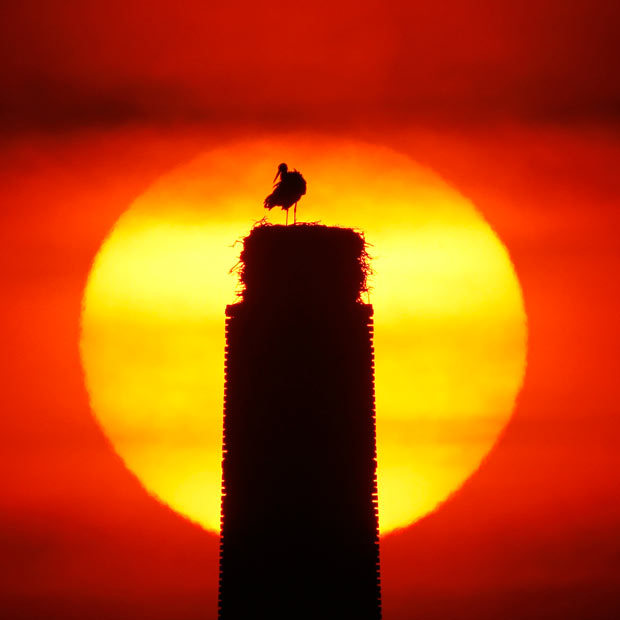 SIMPLY THE NEST   A male stork prepares a nest on the chimney of an old distillery at  sunrise in Nauen-Ribbeck near Berlin.  (Photo: AP via the Telegraph)
