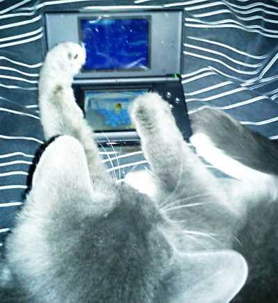 tomnooksbitch:  my cat plays animal crossing too