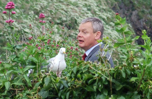 in a garden with a seagull…