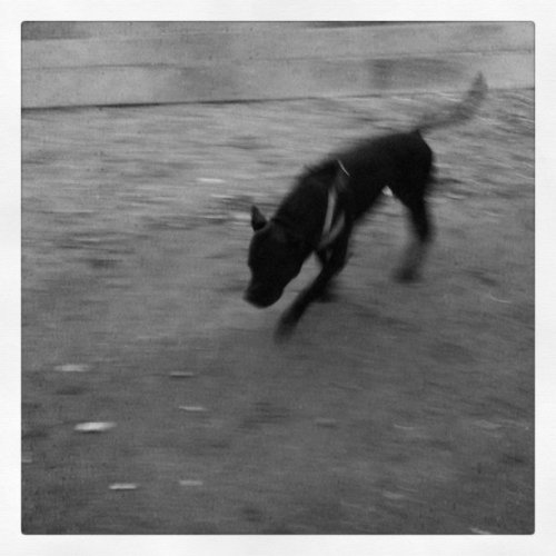 Doggy (Taken with instagram)