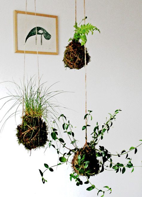 via Design*Sponge - Plant something, and watch it grow