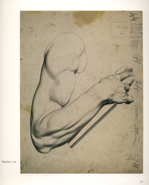 Here's a neat tumblr for any artist learning anatomy: Learning Anatomy
