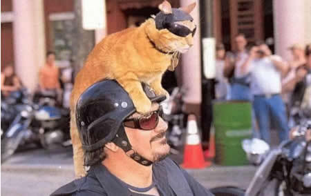 get off of there cat. you cannot be a bad-ass biker. they don't make enough cat biker clothes. and anyway how are you going to drive a motorcycle your fingers aren't long enough.