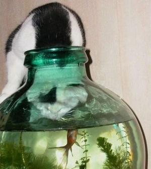 get your head out of there cat. that opening is to give the fish air and to feed him not for you to try to eat him. and besides if he tries to bite your tongue then you will be mad and it will be your own fault cat.