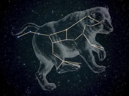 loveyourchaos: Ursa Major, The Great Bear