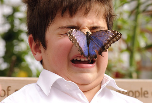 allcreatures:  Photograph: Jonathan Hordle/Rex Features  butterflies are scary up close.