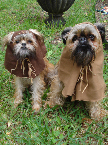 When you really think about it, Ewoks weren't all cute and stuff. They were vicious cannibals. Here are dogs dressed as those demonic furballs.
