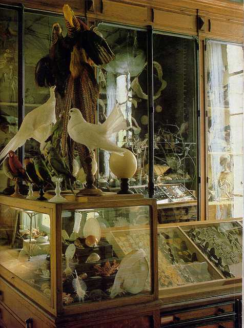 "slenderloris:  ""The Last Taxidermist in Paris"" From a series of photos taken for a 1985 article in World of Interiors about the Deyrolle taxidermy shop. All of the other photos are also beautiful, and you can see them and the accompanying article here."
