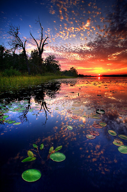 Beautiful trees water clouds nature colorful sunset grass - Colorful nature pics ...