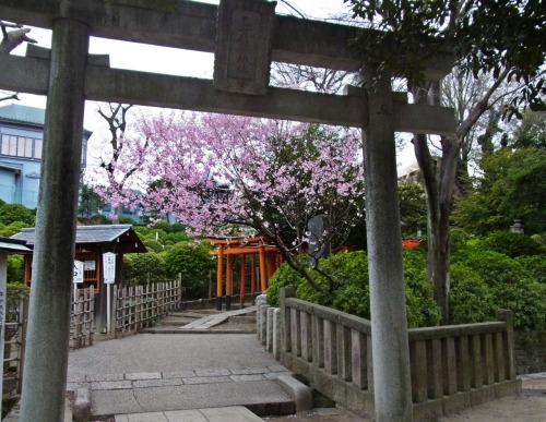 tokyokumako:  the shrine