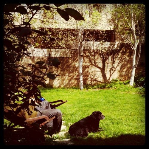 Chillin' in da #garden #dog is happy #springinlebanon rocks (Taken with Instagram at The Blue Basement)