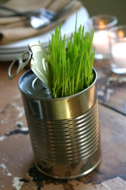 Such a cool idea. Love to grow this in my kitchen and put some mint and herbs in.