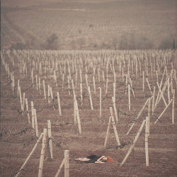Echoes (by oprisco)