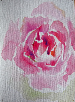 water color rose (: