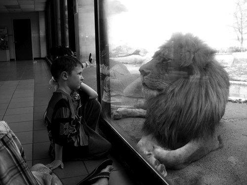 "prideandking:  He's looking at the little boy like he's just as intrigued, yet confused as the boy is at the lion. ""Tell me your name young boy."""