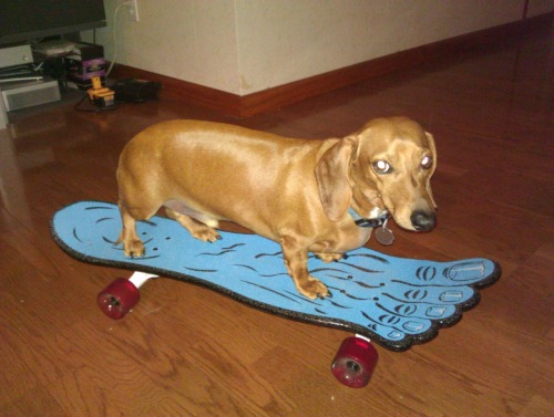 animalsonskateboards:  Freddy