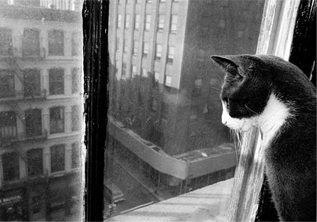 stilllifequickheart: Tony Mendoza, From the Ernie Series, 1985  Cat. Window. City. Classic.