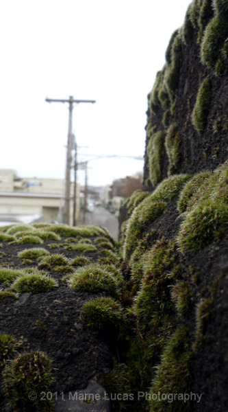 marnelucas:  'Burnside Bridge, Moss' © 2011 Marne Lucas Photography. All Rights Reserved. Walking over the bridge is always inspiring. XO ML  The Summer Diary Project.  Follow us on Facebook + Twitter @summer_diary