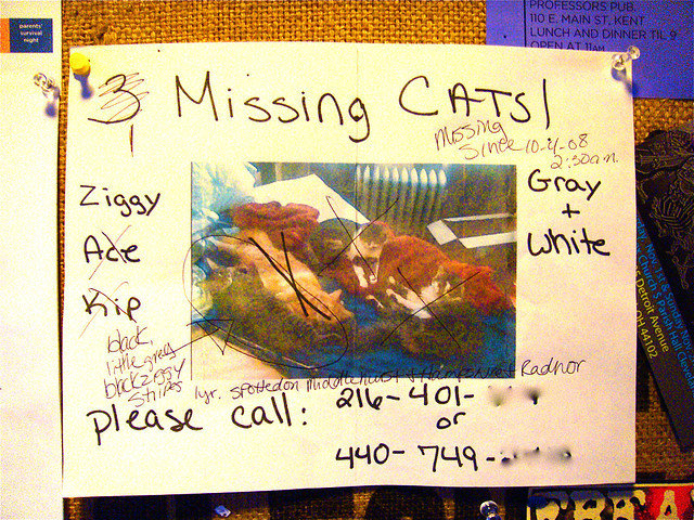 MISSING CATS1 missing cats ✓2 missing cats ✘3 missing cats ✘…just one more ✌   Trip to Ohio - 2008 - 238 on Flickr.