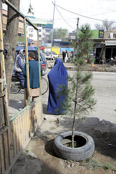 From the Global News Blog - Afghans hope to make dusty Kabul bloom. Correspondent Amelia Newcomb shares a slice of life story from the streets of Kabul.
