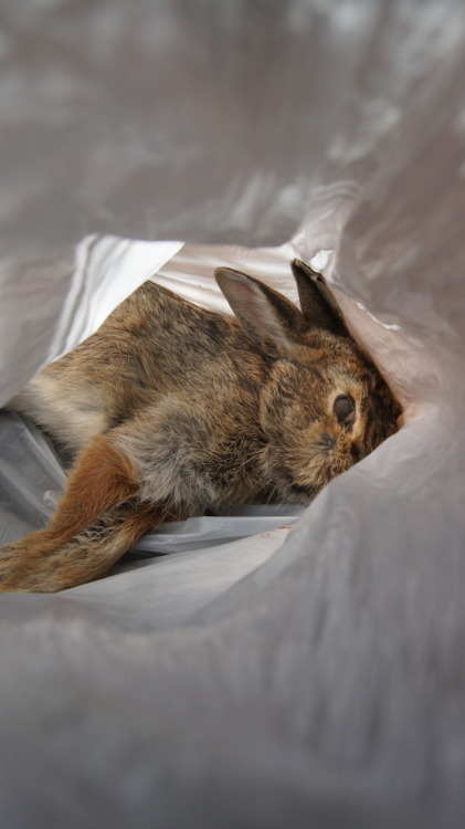 "fleshcircus:  Rabbit tunnelPicked it up on my walk home.. but when I realized it was already decomposing and its stomach was starting to bloat from the gases of its decomposition I ended up burying it. Hopefully the bone will be in decent condition when I get it back :/ Pic taken by Sam  ""Hold the bag open, I'm going to get a picture of it."" I look to these memories more fondly than one might usually, over things that involve stinky, sun-bloated rabbit corpses."