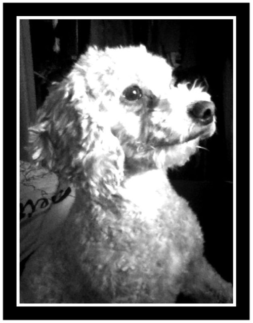 Chowder got a haircut, and demanded a high profile iPod shoot.