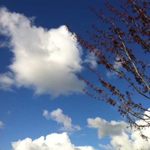 In love with the sky today. (Taken with Instagram at New Seasons - Arbor Lodge)