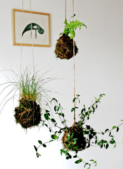 Kokedama. Japanese moss balls.. Don't you just wanna try to make these??