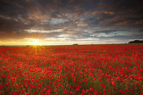 theworldwelivein:  Salisbury Plain poppy field | Salisbury Plain, Wiltshire U.K© antonyspencer