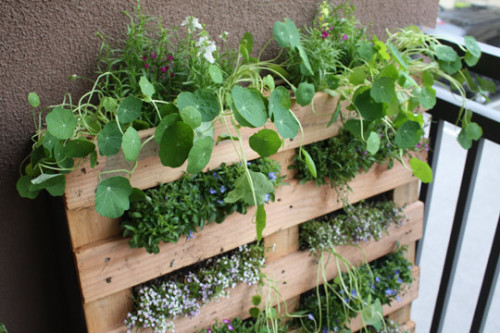 via apartmenttherapy.com - small balcony garden