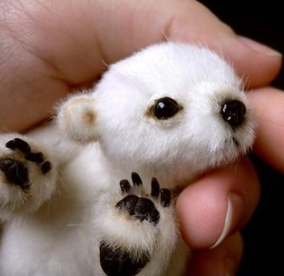 How can I own a baby Polar bear?