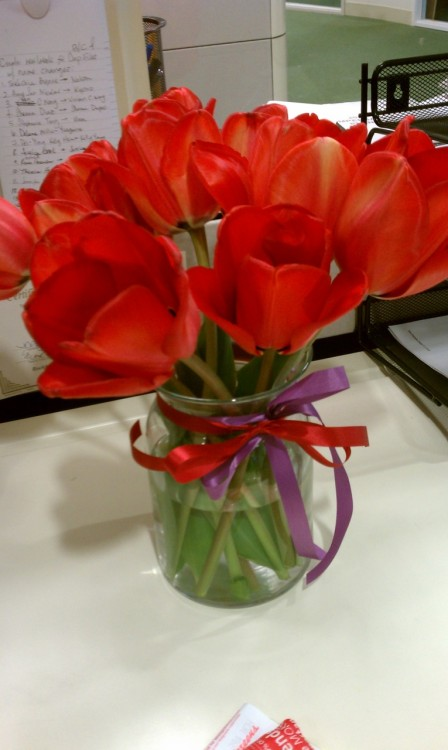 Flowers from my birthday, still bright and beautiful.