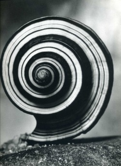 firsttimeuser:  Andreas Feininger. noted for his dynamic black-and-white scenes of Manhattan and studies of the structure of natural objects.