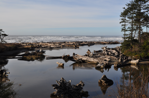 Kalaloch, Washington