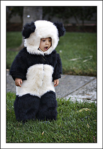 Cute panda….oh wait its a panda baby!  Submitted by carleywarrener