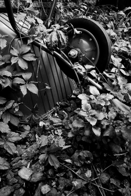 Wheelbarrow This is a photo I took a while back, in my aunt's garden.  The other week I gave it to her as part of a set of greeting cards to use.