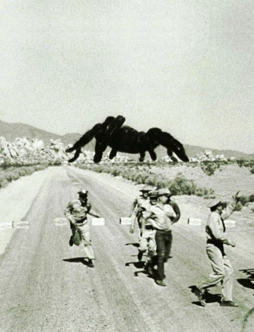 "Tarantula (1955, dir. Jack Arnold) This entry in the ""Science Gone Horribly Wrong"" genre is mainly notable for the giant, rampaging mutant tarantula, young Clint Eastwood's brief appearance as a napalm-dropping fighter pilot, and special effects good enough to traumatize arachnophobic viewers."