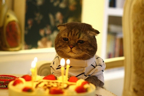 Logan counted the candles; four. That's twenty one in cat years. This was not a happy birthday
