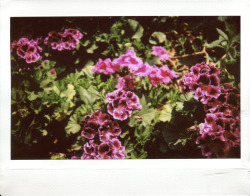 My secret garden Fuji Instax 210 with Instax Wide film