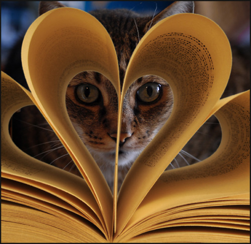 Oddly I find this quite sinister. whatshewanted:  kitties love a good book too. ;D photo by: Dieter Biskamp