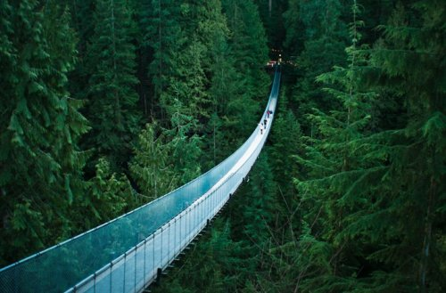candycoatedclown:  Looks like such a surreal bridge to cross and one that would be very challenging to those who are deathly afraid of heights. Looks like the Capilano Suspension Bridge in Vancouver. I think it is. I would be up for going across such a bridge because I think it would be a unique experience. Life is not worth living if you don't step out of your comfort zone a bit from time to time. We all want bold, great, and eventful adventures to look back on and recount as we advance in age.