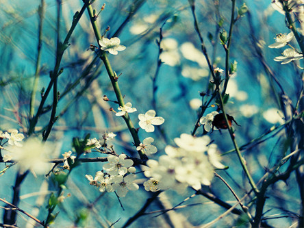 justbesplendid:  spring flowers   I love this! I really need to start using my lensbaby!