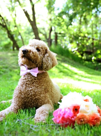ysvoice:| ♕ |  Best dog with a bouquet  | by Erica Loeks | via stylemepretty