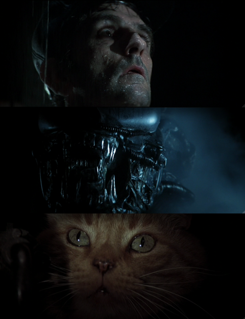 mycinemania:  Alien (1979, dir. Ridley Scott)