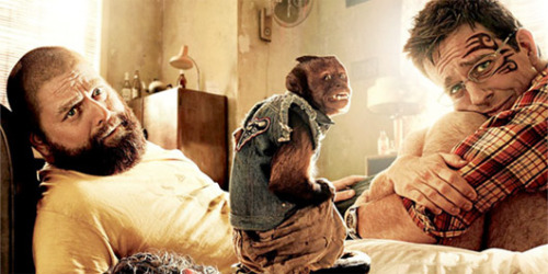 'Hangover 2' monkey addicted to smokingDirector Todd Phillips claims his star monkey was trained to enjoy cigarettes and consequently won't give them up.